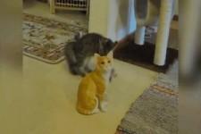 Katze geht voll ab