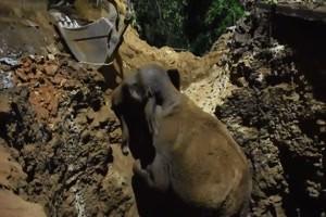 Elefanten-Rettung