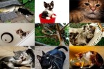 Must-Love-Cats-3---Muss-Katzen-lieben-3.ppsx auf www.funpot.net