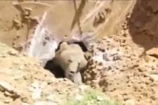 Befreie den Bären
