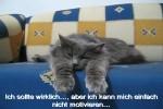 Tiere-wie-sie-leiben-und-leben.mp4 auf www.funpot.net