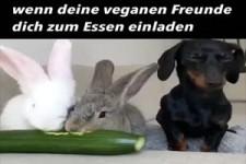 wenn deine veganen Freude
