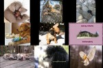 Bilder-Galerie---Tiere-1.pps auf www.funpot.net