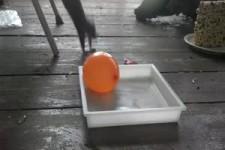 Eichhörnchen entdeckt Wasserballon
