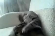 Cat-self-attack