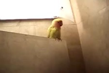 vogel-nest