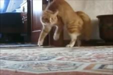 michael-jackson-thriller-cat