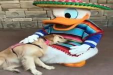 Donald überrascht den Hund