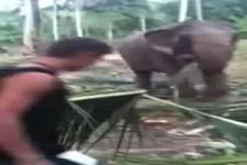 Elefanten-Rüsselgrabscher