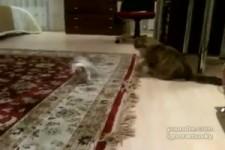 Garfield und sein Freund