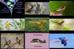 Bilder-Galerie---Vögel.pps auf www.funpot.net
