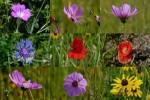 Wildflowers---Wildblumen.ppsx auf www.funpot.net