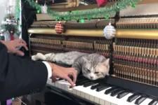 Katze liebt Weihnachtsmusik