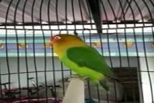 Spezieller Papagei