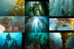 Kelp---Seetang.ppsx auf www.funpot.net