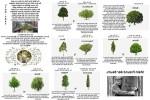 Mein-Freund-der-Baum.pps auf www.funpot.net