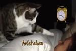 Lustige-Katzen-wünschen-einen-guten-Morgen.mp4 auf www.funpot.net
