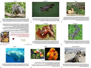 ungewöhnliche Tiere - Tierwelt Australiens