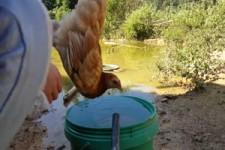Huhn steht in der Luft