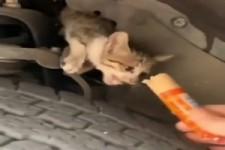 Katze rausgelockt mit leckerem Futter
